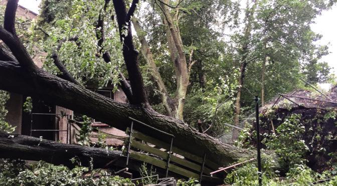Schwerer Sturm in Liebenwalde
