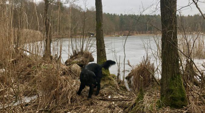 Hundewanderung rund um den Bogensee am 07.02.2017